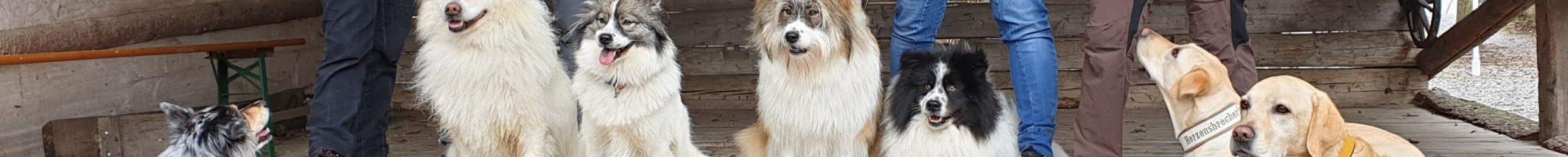 Hundeschule einHUNDert%
